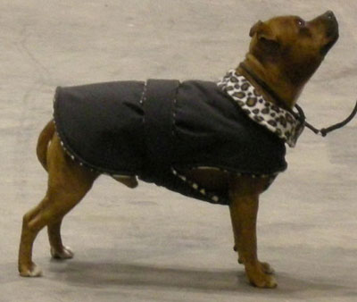 Dog Fleece Coat Pattern