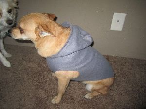 Dog Winter Clothes - dog - hoodies