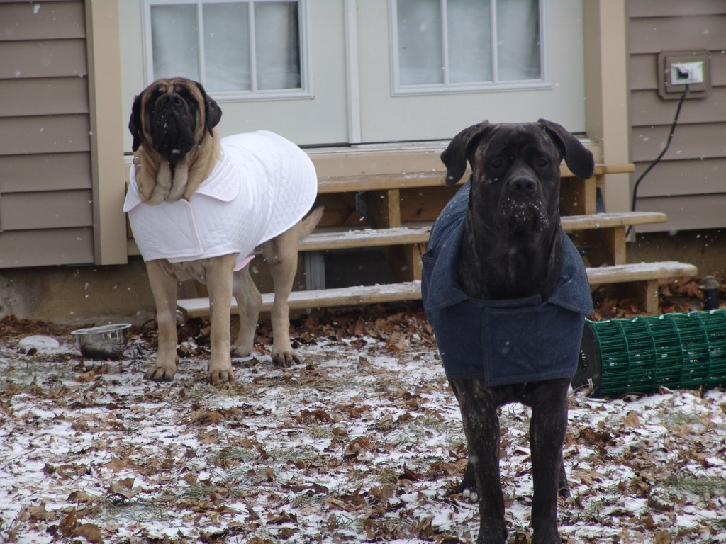Reversible Casual Jacket for Large Dogs