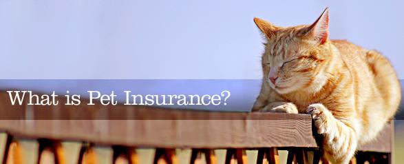 Characteristics of Best Pet Insurance