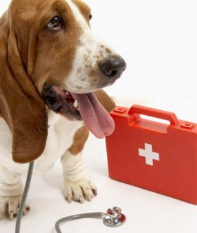 pet_medical_insurance